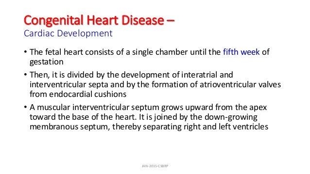 Congenital Heart Disease – Cardiac Development • The fetal heart consists of a single chamber until the fifth week of gest...