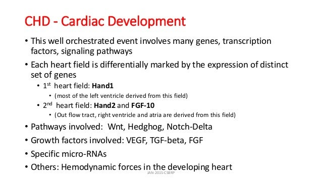 CHD - Cardiac Development • This well orchestrated event involves many genes, transcription factors, signaling pathways • ...