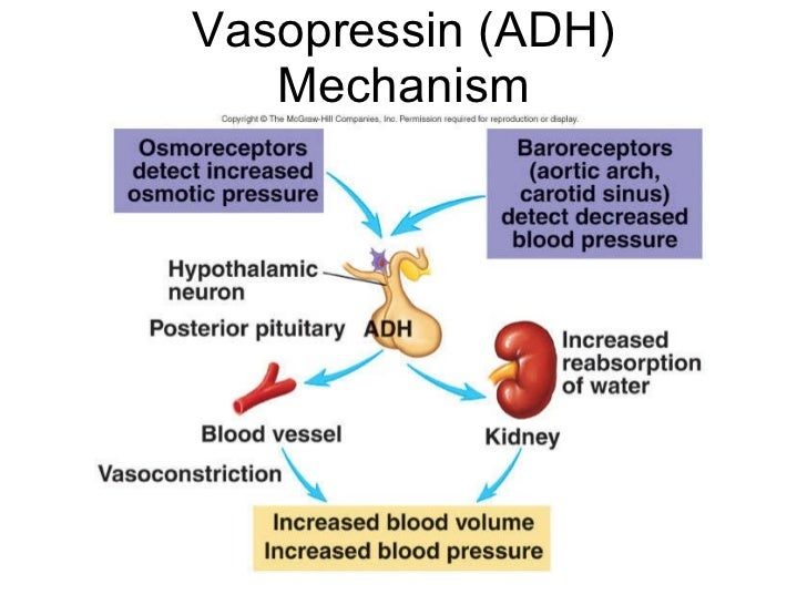 adh essay This can result in an increase in thirst and fluid intake that suppresses adh secretion and increases urine output  popular essays  phl251 nature of thought .