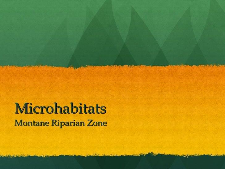 Microhabitats Montane Riparian Zone