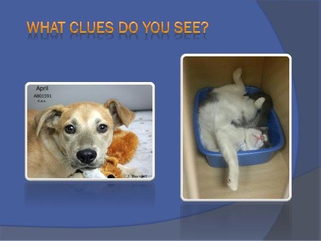 Writing Descriptions That Get Pets Adoption