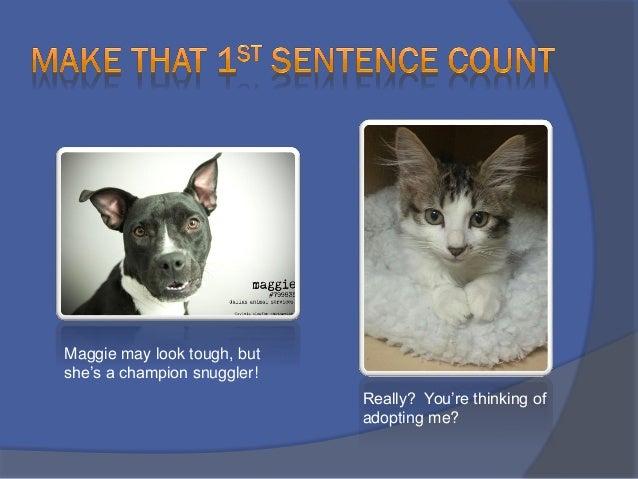 funny dog adoption profiles