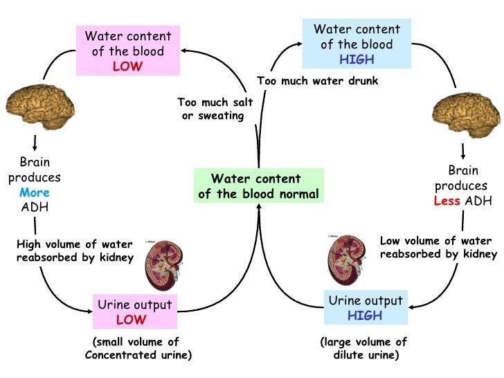 Effects of salt water on osmoregulation essay