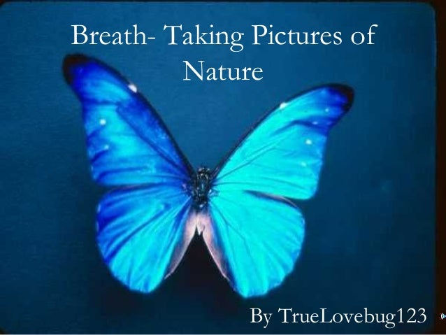 Breath- Taking Pictures of Nature By TrueLovebug123