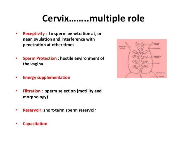 Sperm mucous compatablility