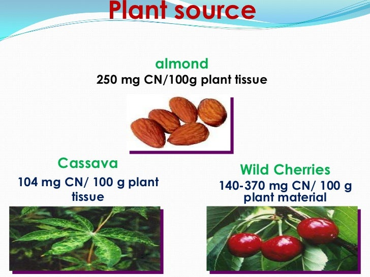 Plant source                     almond            250 mg CN/100g plant tissue      Cassava                     Wild Cherr...