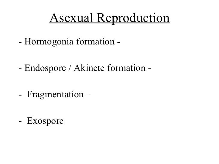 Oscillatoria Hormogonia