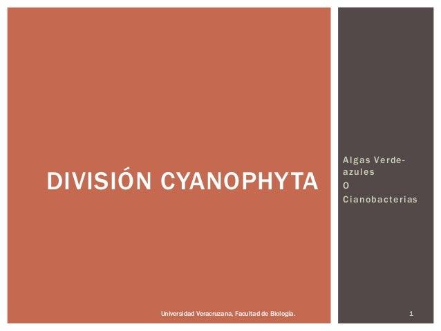Algas Verde- azules O Cianobacterias DIVISIÓN CYANOPHYTA Universidad Veracruzana, Facultad de Biología. 1