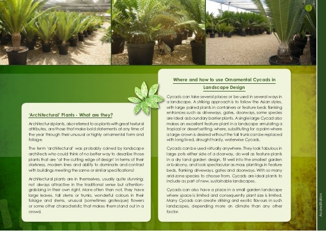 9 Where And How To Use Ornamental Cycads In Landscape Design Cycads Can  Take Several Places Or Be Used In Several Ways In A Landscape.