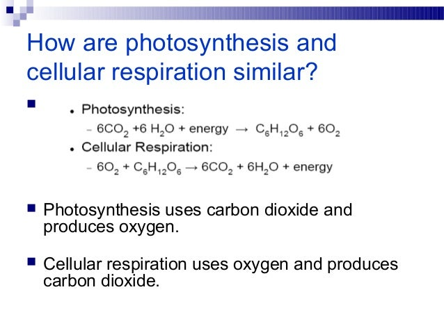 photosynthesis and cellular respiration similarities Name:_____date:_____period:_____ photosynthesis and cellular respiration topic: photosynthesis – how do cells make food 1 photosynthesis occurs in the chloroplast.