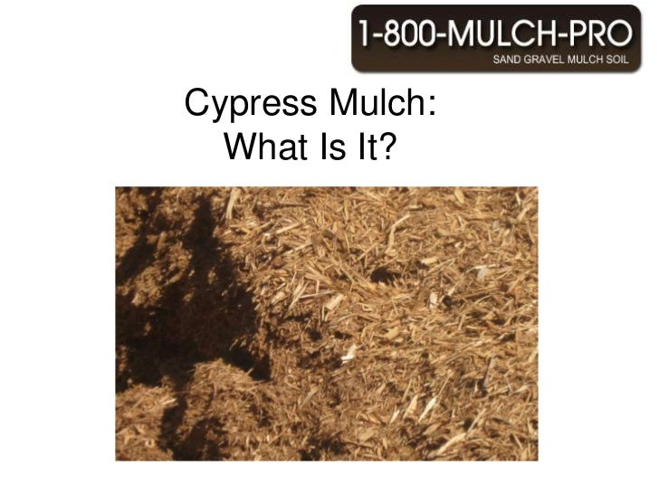 Cypress Mulch:  What Is It?<br />