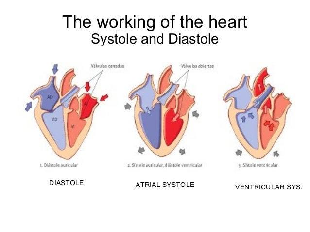 circulatory system 26 638
