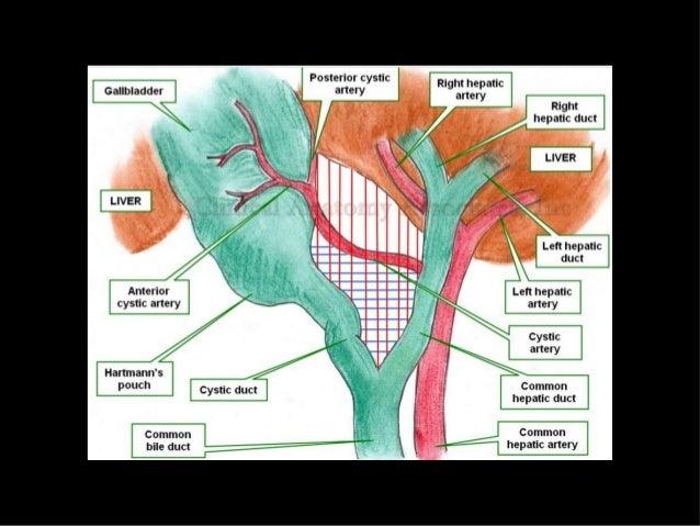 Cystic artery anomalies