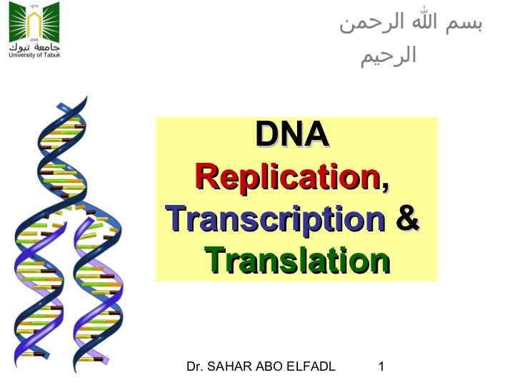 dna replication transcription and translation This lesson plan consists mostly of student-centered activities that involve learning and mastering the steps in dna replication, transcription, and translation.