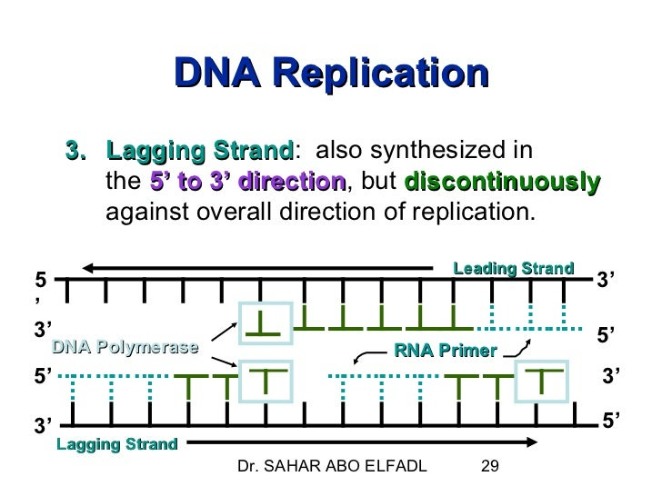 dna replication transcription and translation essay Dna research paper dna structure: dna (deoxyribonucleic acid) is the code for life it makes up the genetic material of living organisms dna, translation and transcription essay dna replication and protein synthesis all the cells in the body undergo cell division either for growth, or.