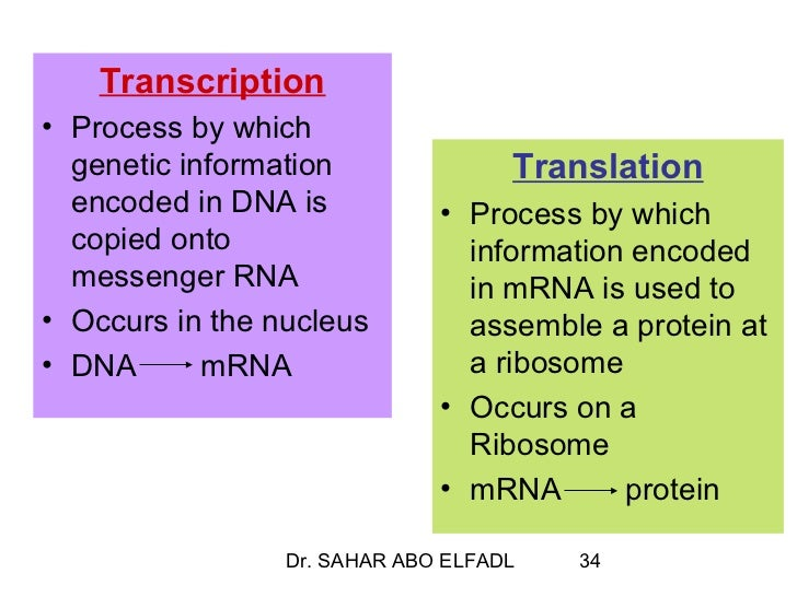 Cytogenetics 2 replication, transcription and translation
