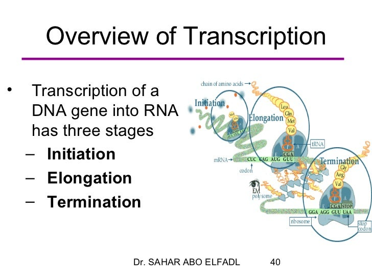 an overview of the process of dna transcription and dna replication Dna & protein synthesis worksheet name_____ section a: dna what is the first step in the replication process dna both rna section h: transcription.