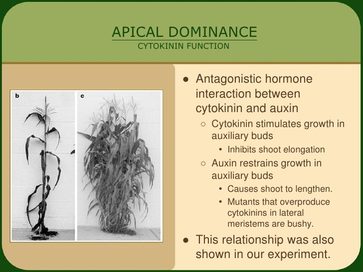 cytokinin and auxin relationship marketing