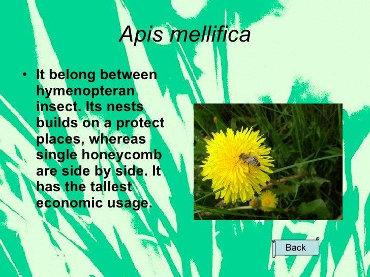 writing apis mellifica