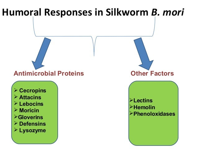 diapause in silkworm bombyx mori with Embryonic thermosensitive trpa1 determines transgenerational diapause  phenotype of the silkworm, bombyx mori azusa sato, takaaki.