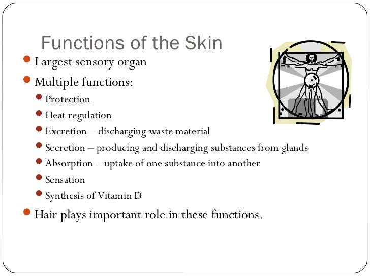 structure and function of skin Meet the skin (overview) what is skin (epidermis) what lies beneath the epidermis and yet, many of us can go an entire day without thinking about the functions of our skin but what are the functions of our skin if i told you this was your arm right here, and this is you giving a.