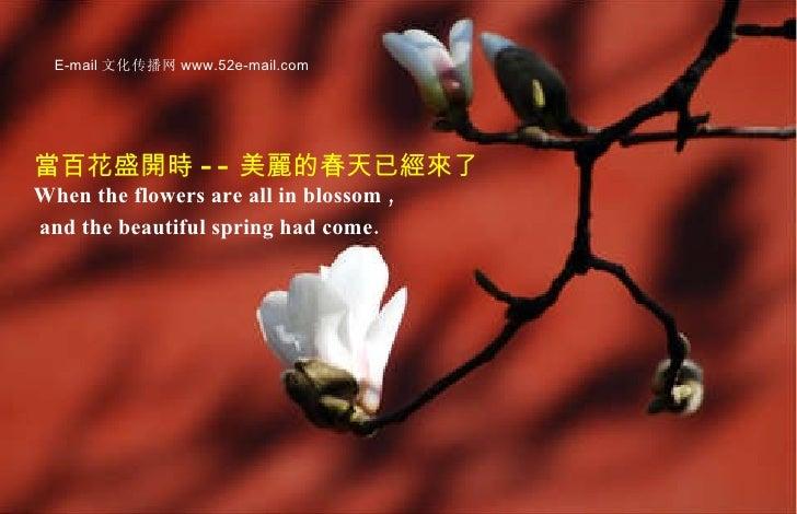 當百花盛開時 -- 美麗的春天已經來了 When the flowers are all in blossom ,  and the beautiful spring had come.   E-mail 文化传播网 www.52e-mail....