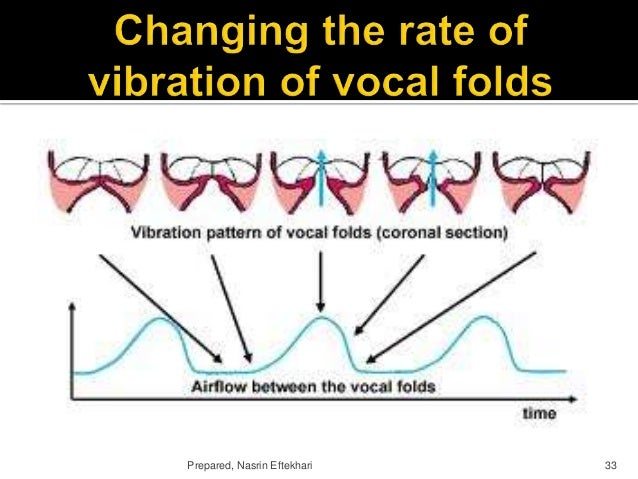 phonetics and vocal folds This is a list of web sites that might be useful in an introductory phonetics course for classroom demos or homework assignments most of these sites stroboscopic videos of vocal-fold vibration vocal folds revealed, from the voice and swallowing center of maine.