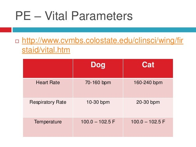 normal respiratory rate for dogs