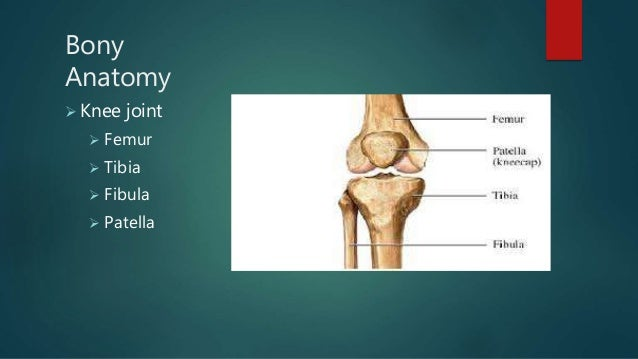 Total knee replacement 1 bony anatomy knee joint femur tibia fibula patella ccuart Image collections