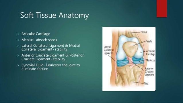Total knee replacement 1 bony anatomy knee joint femur tibia fibula patella 5 ccuart Image collections