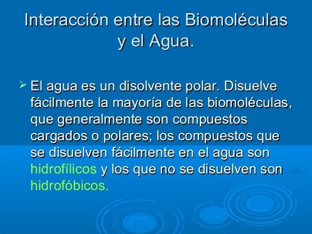 biomol u00e9culas agua
