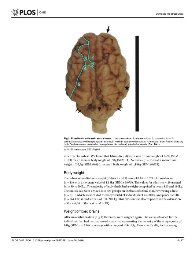Brain Mass And Encephalization Quotients In The Domestic Industrial P