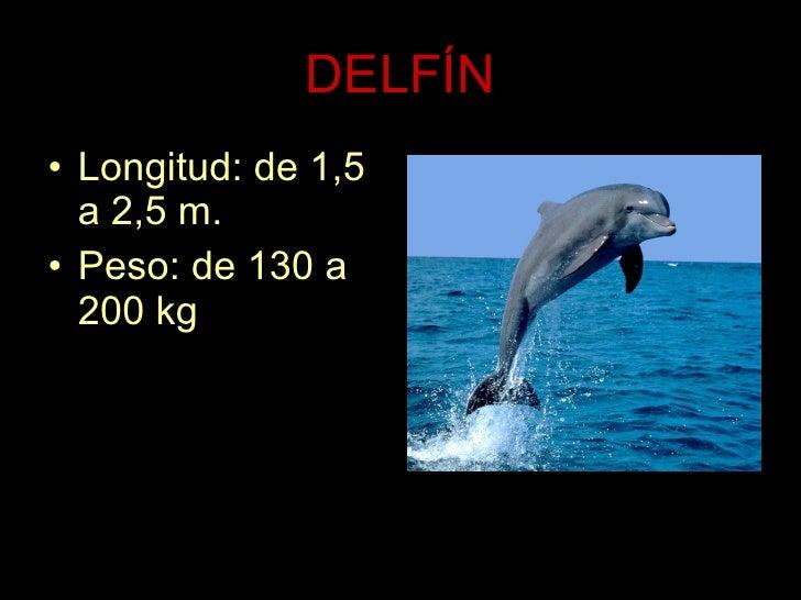 DELFÍN <ul><li>Longitud: de 1,5 a 2,5 m. </li></ul><ul><li>Peso: de 130 a 200 kg . </li></ul>