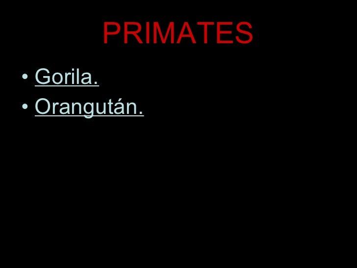 PRIMATES <ul><li>Gorila. </li></ul><ul><li>Orangután. </li></ul>
