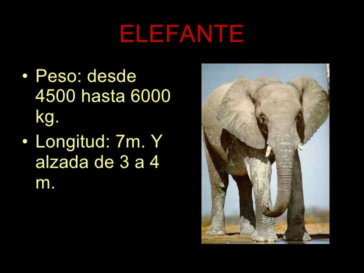 ELEFANTE <ul><li>Peso: desde 4500 hasta 6000 kg. </li></ul><ul><li>Longitud: 7m. Y alzada de 3 a 4 m. </li></ul>
