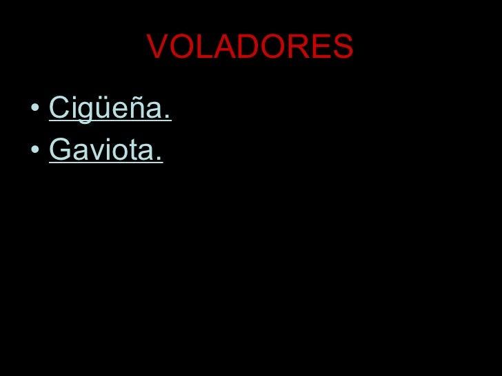 VOLADORES <ul><li>Cigüeña. </li></ul><ul><li>Gaviota. </li></ul>