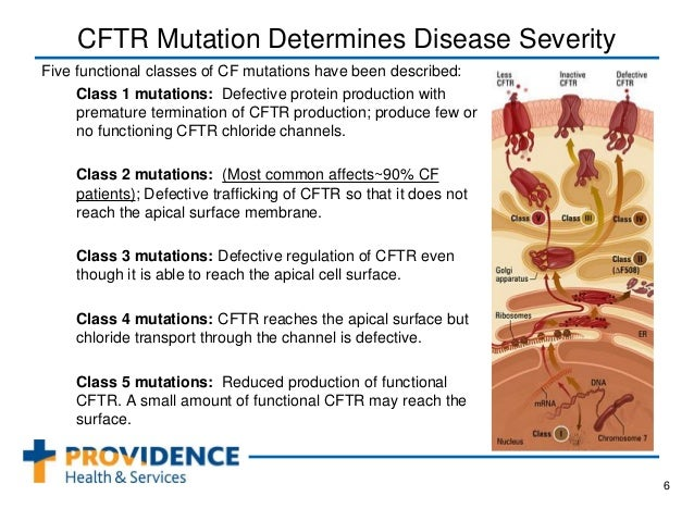 explain cystic fibrosis For example, mutations in genes other than cftr might help explain why some people with cystic fibrosis are more severely affected than others.