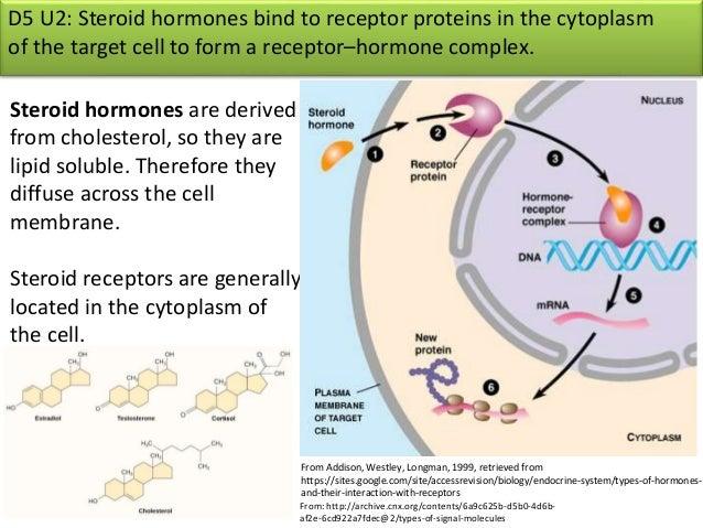 D5 hormones and metabolism presentation