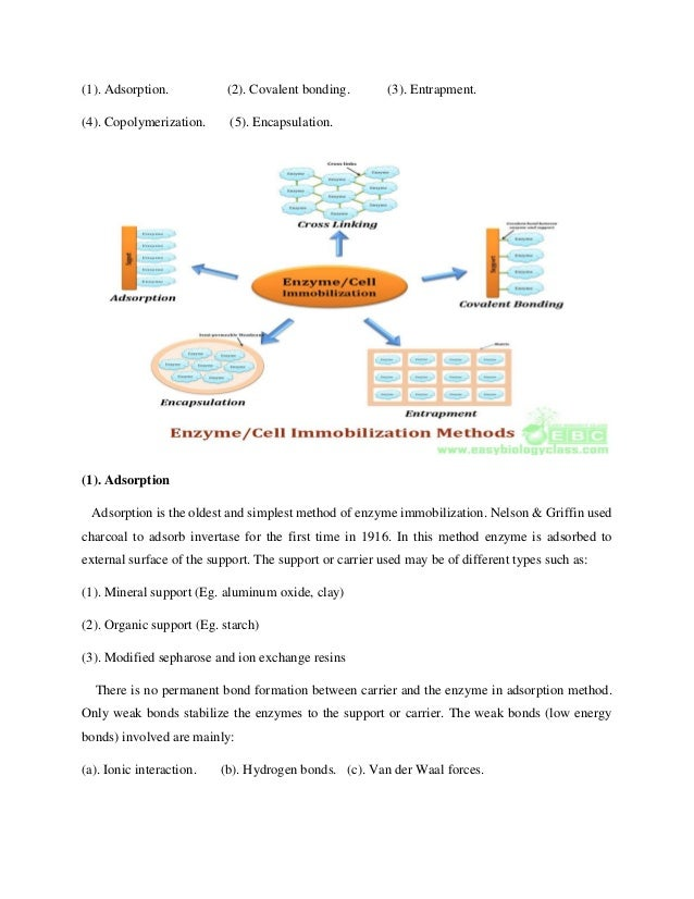 Enzyme Immobilization 1