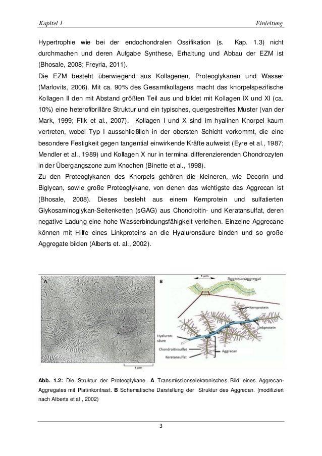 Groß Makroskopische Anatomie Der Typischen Langer Knochen ...