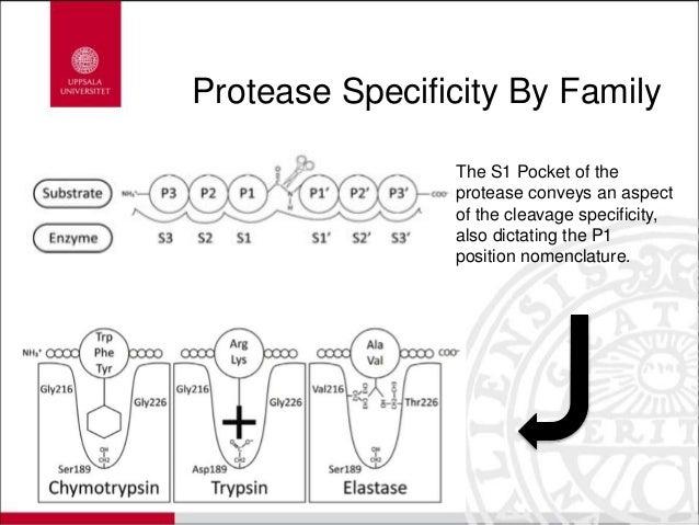 Serine Protease, A Basis of Immunity Through Evolution