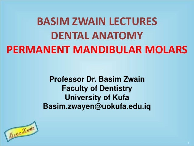 BASIM ZWAIN LECTURES DENTAL ANATOMY PERMANENT MANDIBULAR MOLARS Professor Dr. Basim Zwain Faculty of Dentistry University ...