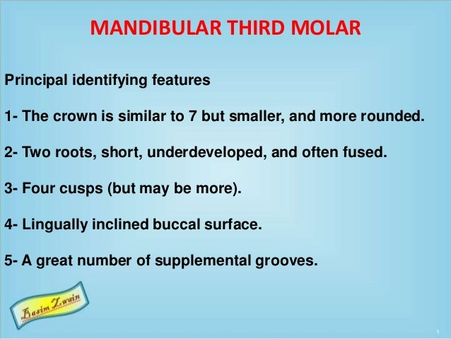 MANDIBULAR THIRD MOLAR Principal identifying features 1- The crown is similar to 7 but smaller, and more rounded. 2- Two r...