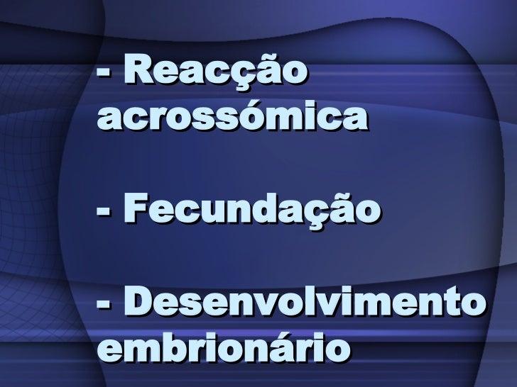 - Reacção acrossómica  - Fecundação  - Desenvolvimento embrionário