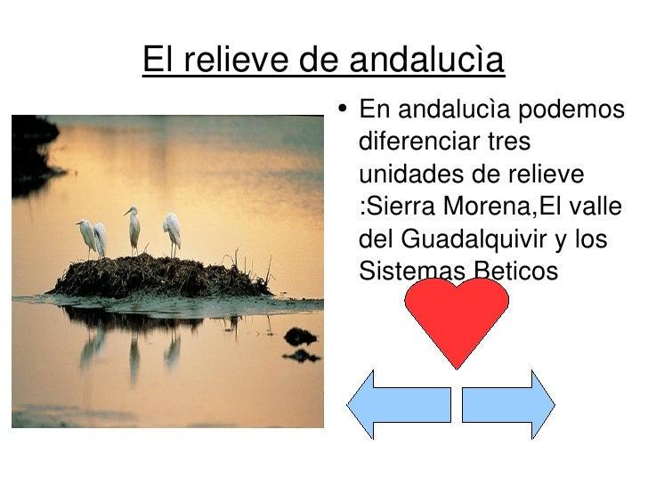 El relieve de andalucìa <ul><li>En andalucìa podemos diferenciar tres unidades de relieve :Sierra Morena,El valle del Guad...