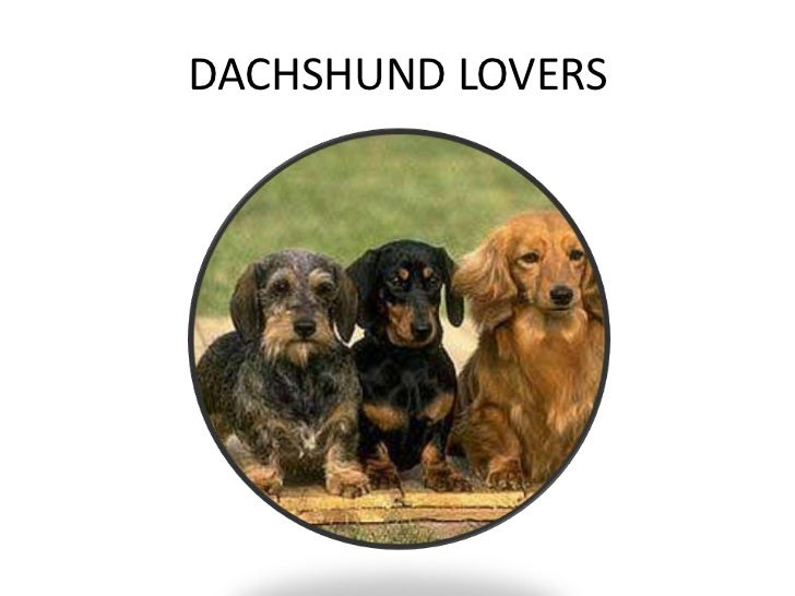 DACHSHUND LOVERS <br />