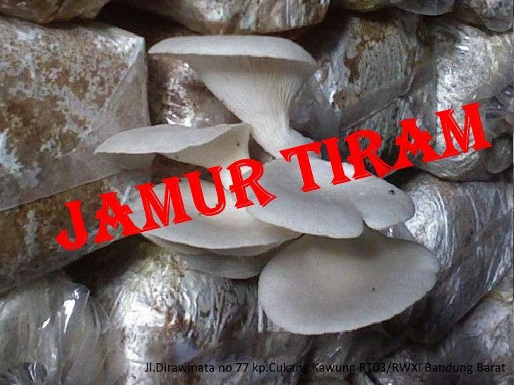 JAMUR TIRAM<br />Jl.Dirawinata no 77 kp.CukangKawung RT03/RWXI Bandung Barat<br />