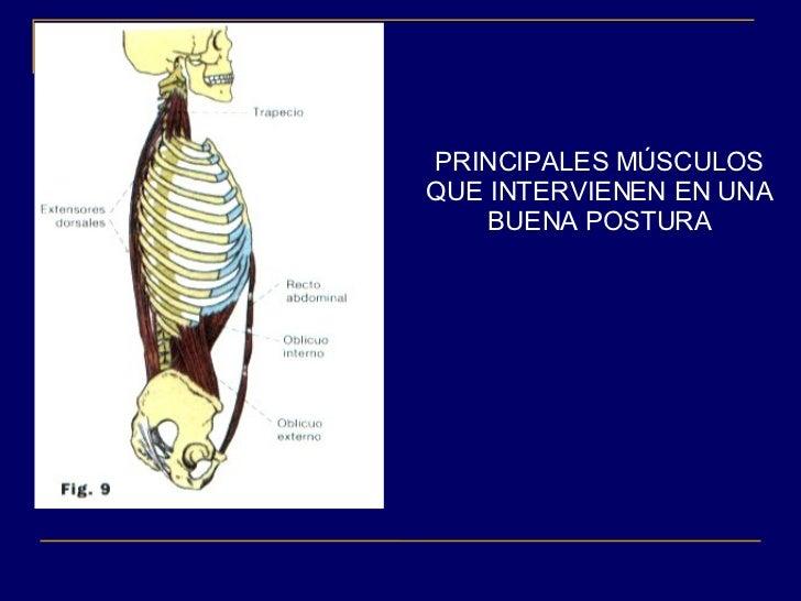 Columna y postura for Sillas para una buena postura