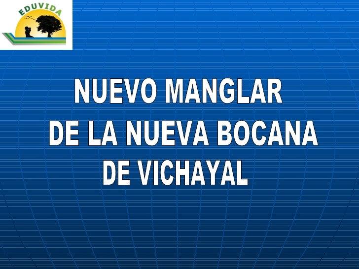 NUEVO MANGLAR DE LA NUEVA BOCANA DE VICHAYAL