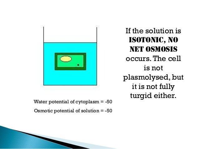 the occurrence of osmosis and Osmosis and the blistering of polyurethane waterproofing membranes graham finch,  blisters are also a frequent occurrence in fluid-applied.